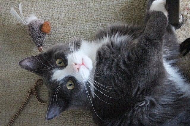Eco-Friendly Cat Toys6