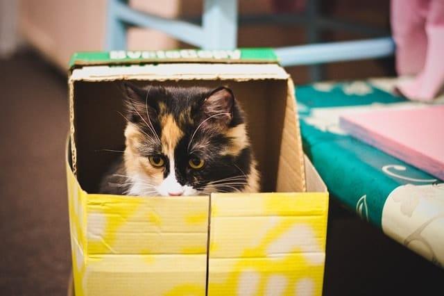 Eco-Friendly Cat Care