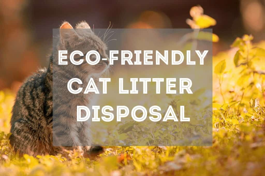 Eco-Friendly Ways to Dispose of Cat Litter - Fluffy Kitty