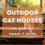 Best Natural Cat Litter Compilation 2019