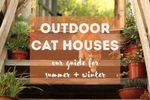 Best Outdoor Cat House | Fluffy Kitty