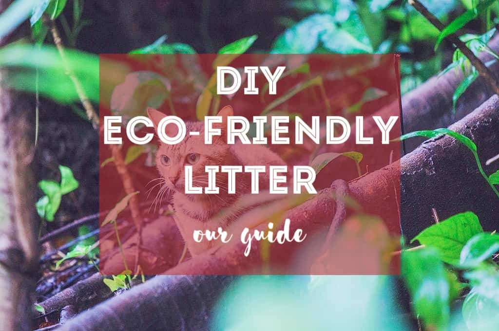 How to Make Eco-Friendly Cat Litter