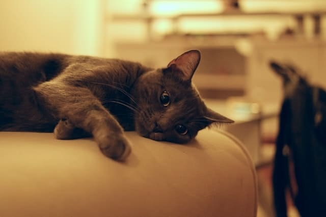 Side Effects of Declawing a Cat | Fluffy Kitty