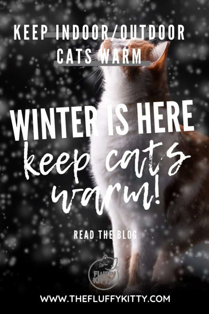 Winter Guide to Keeping Cats Warm (for Indoor & Outdoor Cats) www.thefluffykitty.com The Fluffy Kitty #winteriscoming #cats #indoorcats #outdoorcats