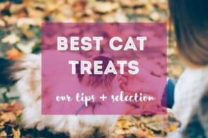Best Cat Treats | Fluffy Kitty