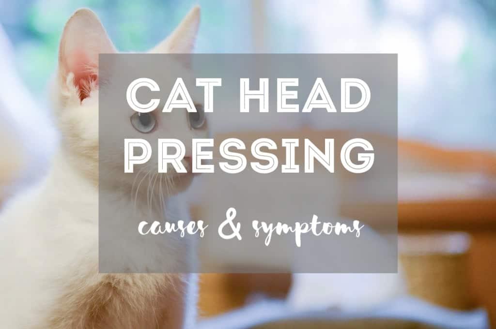 Cat Head Pressing | Fluffy Kitty