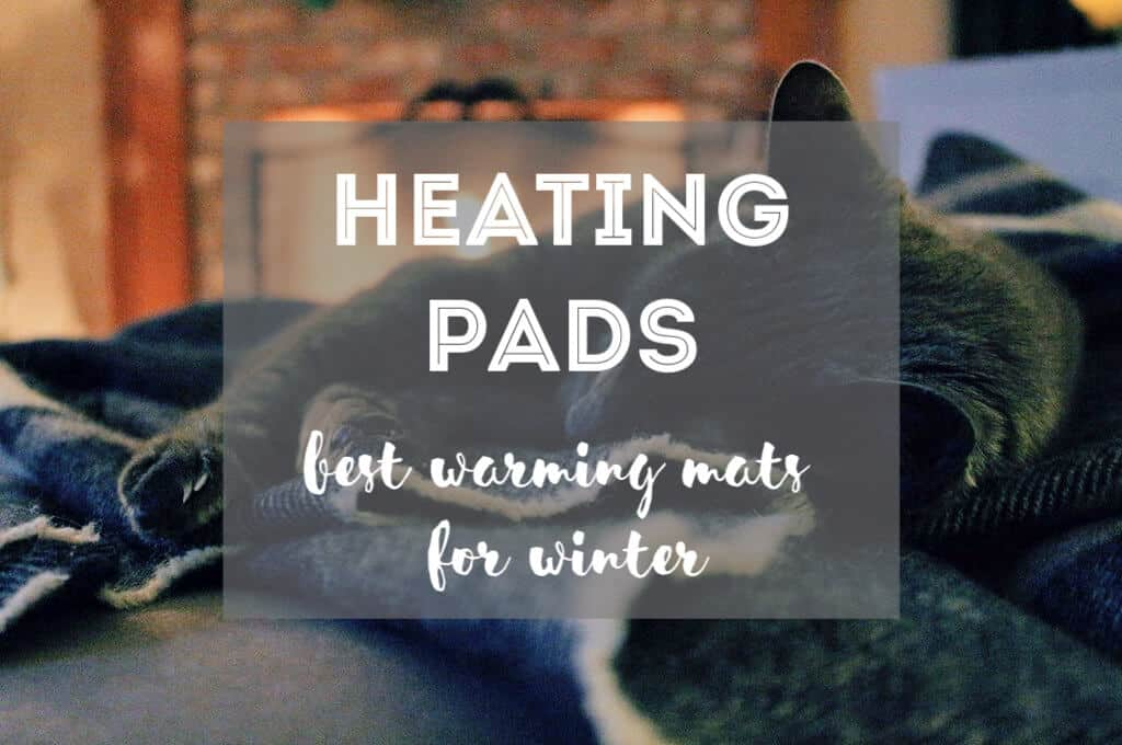 Best Cat Heating Pads | Fluffy Kitty