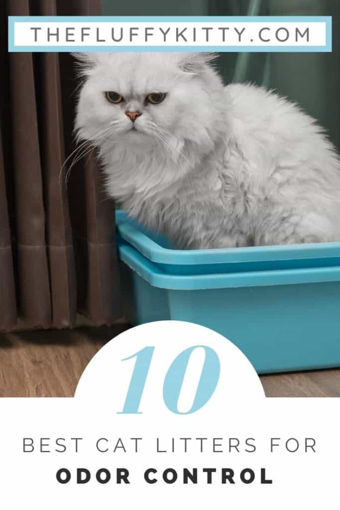 10 Best Cat Litters for Odor Control