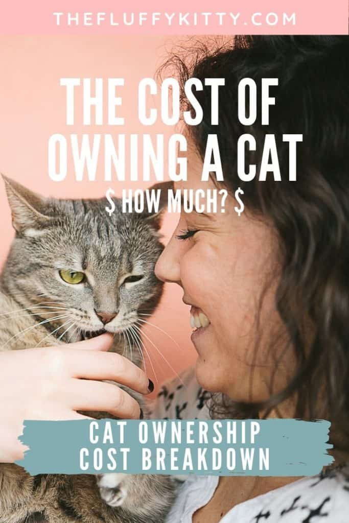 Cost of Owning a Cat - Cost Breakdown of Cat Ownership | Fluffy Kitty