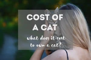 Estimated Cost of Owning A Cat | Fluffy Kitty