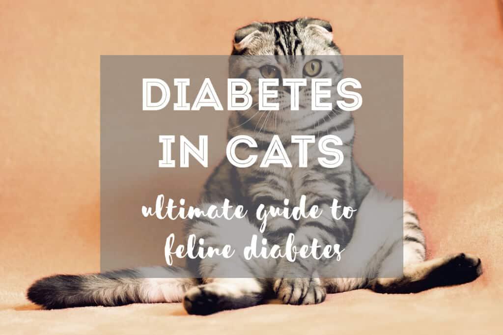 Diabetes in Cats | Guide to Feline Diabetes - Fluffy Kitty Blog