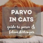 4 Best Cat Heating Pads for Winter