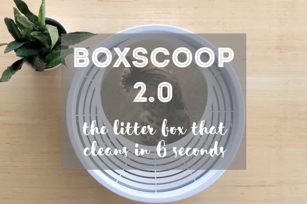 Boxscoop 2.0 | Fluffy Kitty