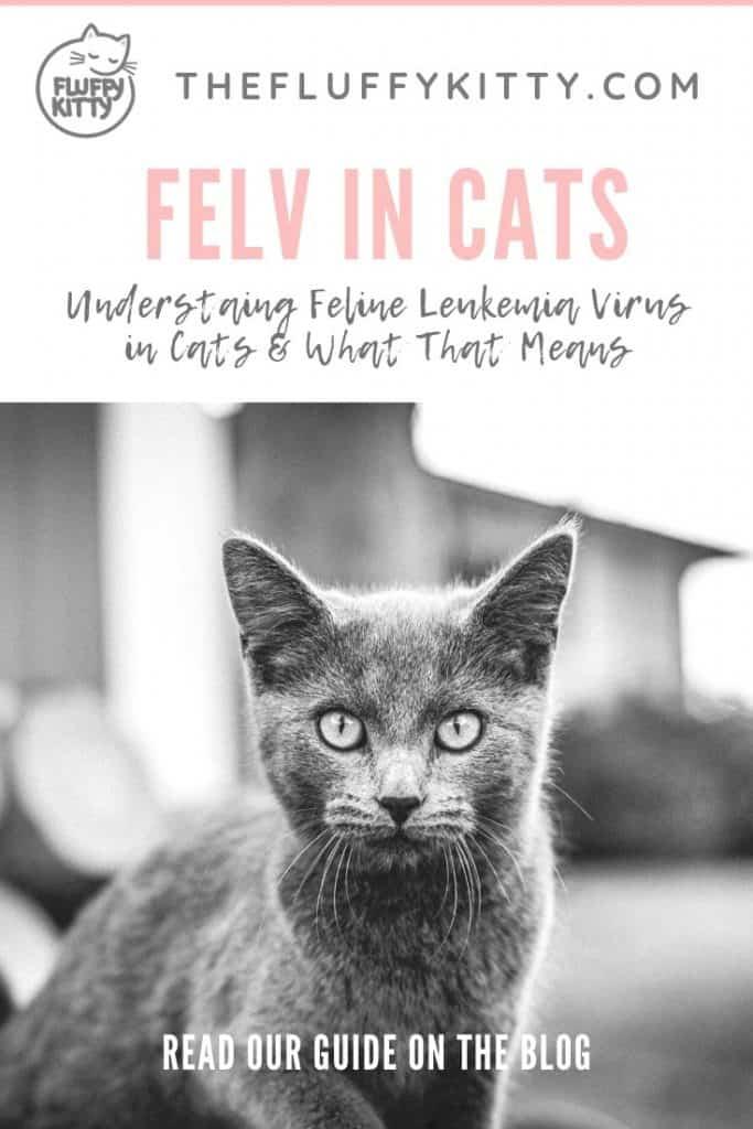 FELV in Cats: Guide to Understanding Feline Leukemia Virus