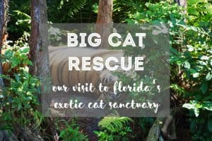 Big Cat Rescue Visit from Fluffy Kitty