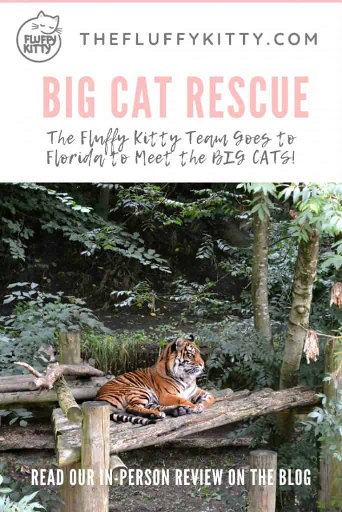 Big Cat Rescue, Tampa, Florida #bigcats #cats #catrescue #fluffykitty