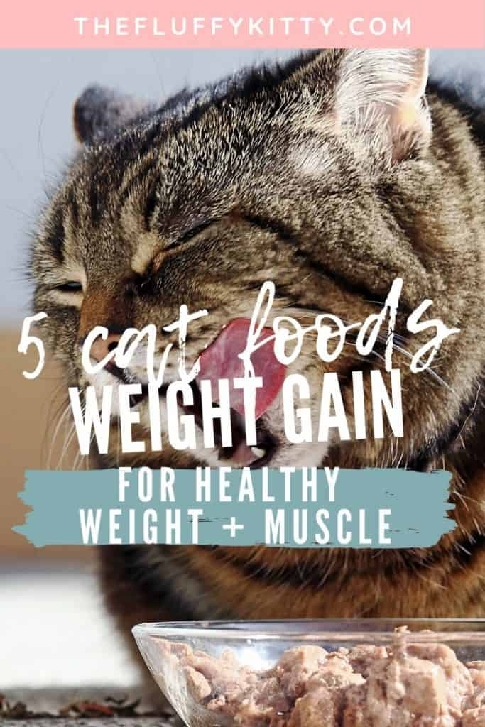 Best Cat Foods for Healthy Weight Gain in Cats #cats #catfood #catnutrition #cathealth Guide by The Fluffy Kitty www.thefluffykitty.com