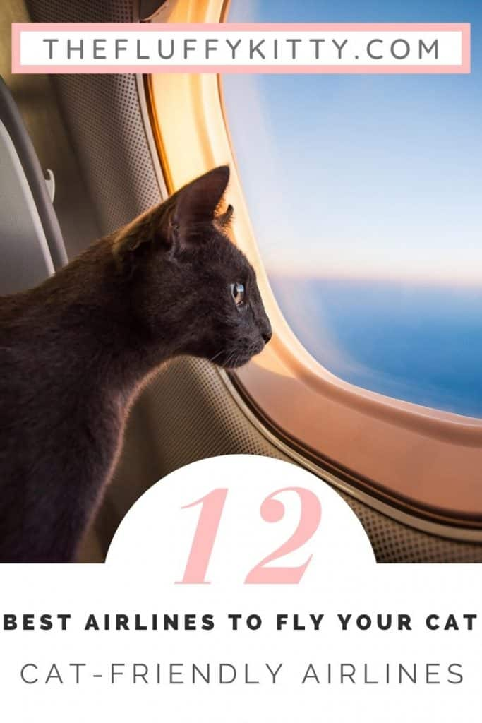 12 Cat-Friendly Airlines to Fly Your Cat #cats #airplanes #pettravel #catlovers #travelwithpets