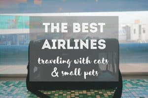 The Best Airlines for Cats   Ultimate Guide by Fluffy Kitty