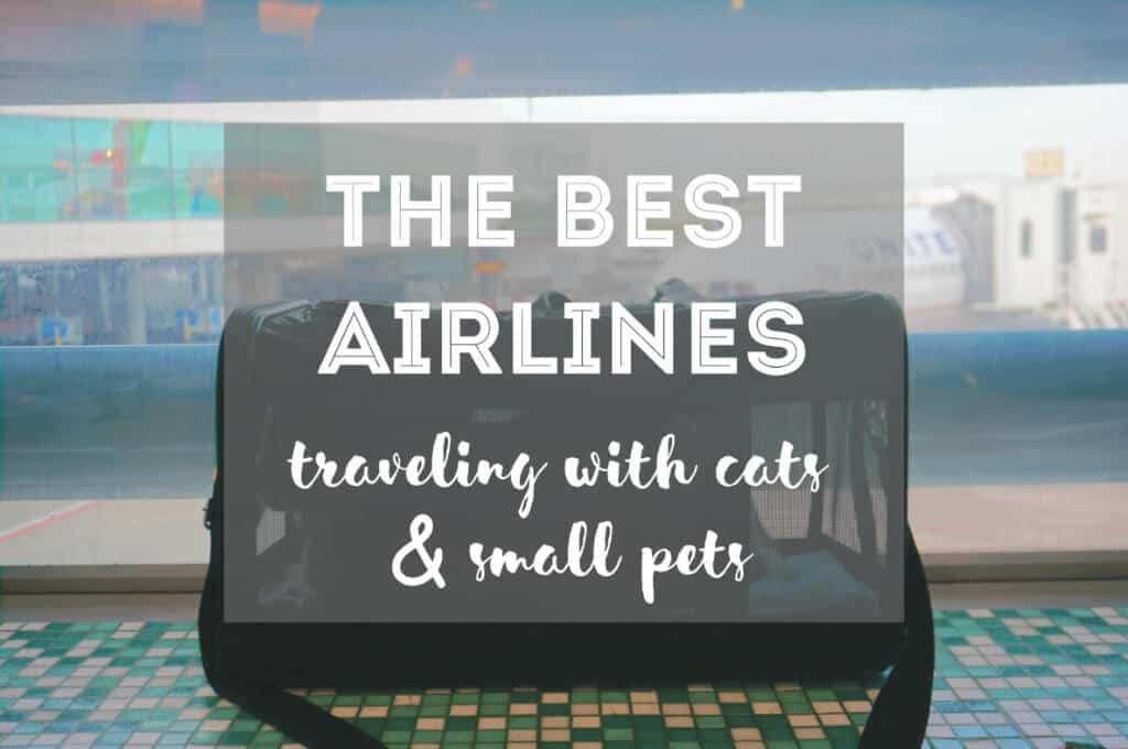 The Best Airlines for Cats | Ultimate Guide by Fluffy Kitty