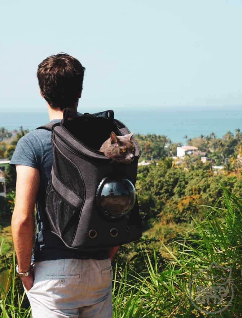 12 Do's & Don'ts of Backpacking with Cats | Fluffy Kitty