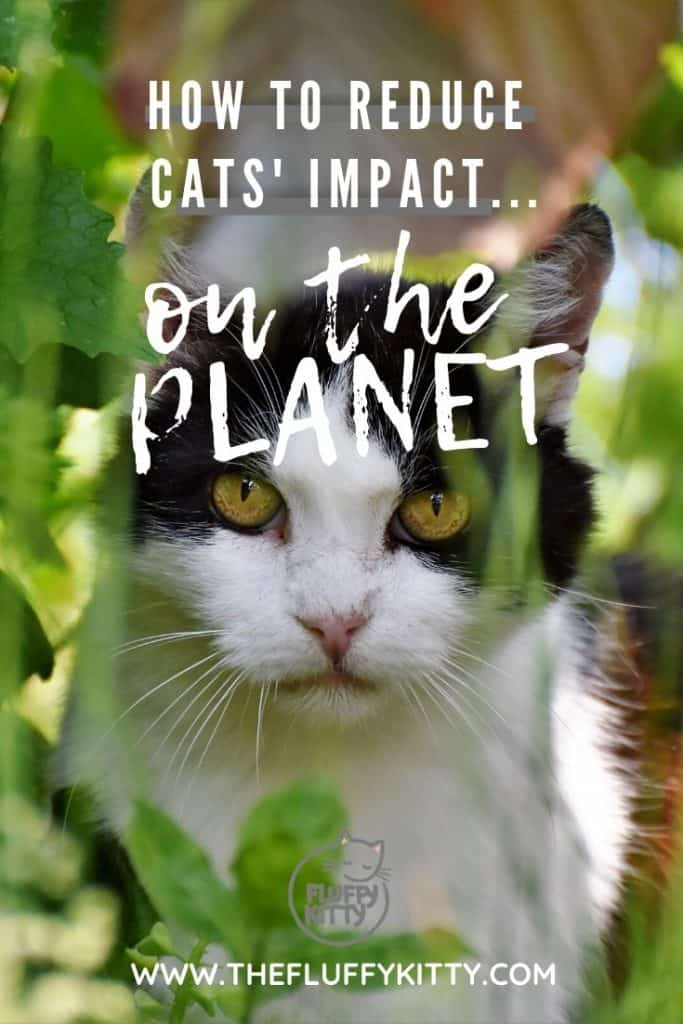 How to Reduce Your Cat's Carbon Paw Print - The Fluffy Kitty www.thefluffykitty.com