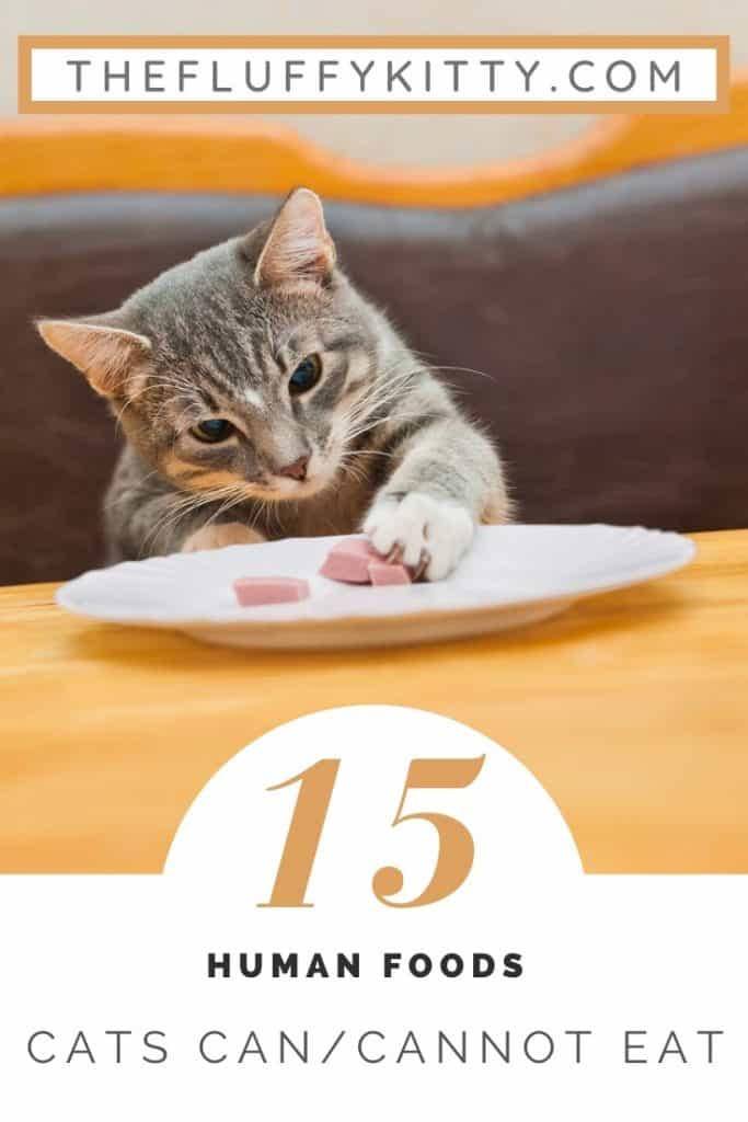 15 Human Foods Cats Cat and Cannot Eat #catfood #cats #infographic #catlovers www.thefluffykitty.com The Fluffy Kitty Blog