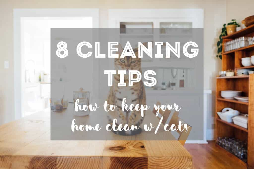 How to Keep Your Home Clean with Cats | Fluffy Kitty