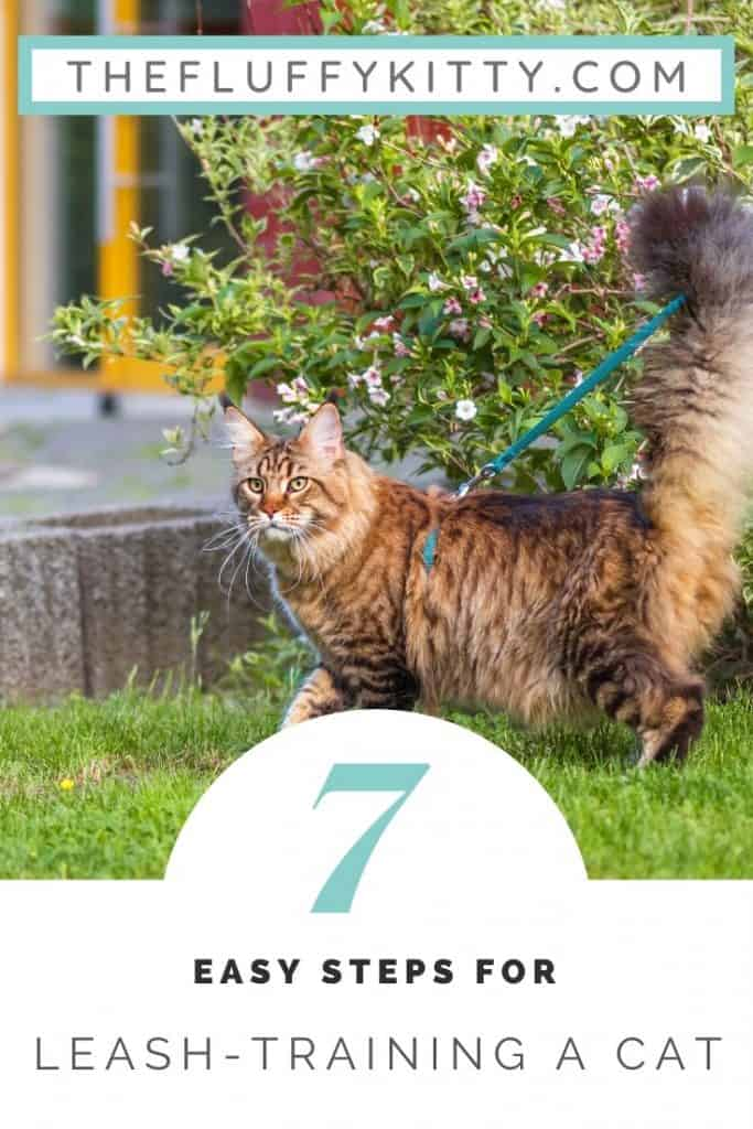 Leash Training Your Cat to Walk on a Leash in 7 Simple Steps! Guide by The Fluffy Kitty www.thefluffykitty.com #cats #cattraining #catleash #adventurecats