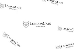 International Cat Show 2019 LondonCats | Fluffy Kitty