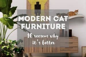 10 Reasons Why Buying Modern Cat Furniture is Better | Fluffy Kitty