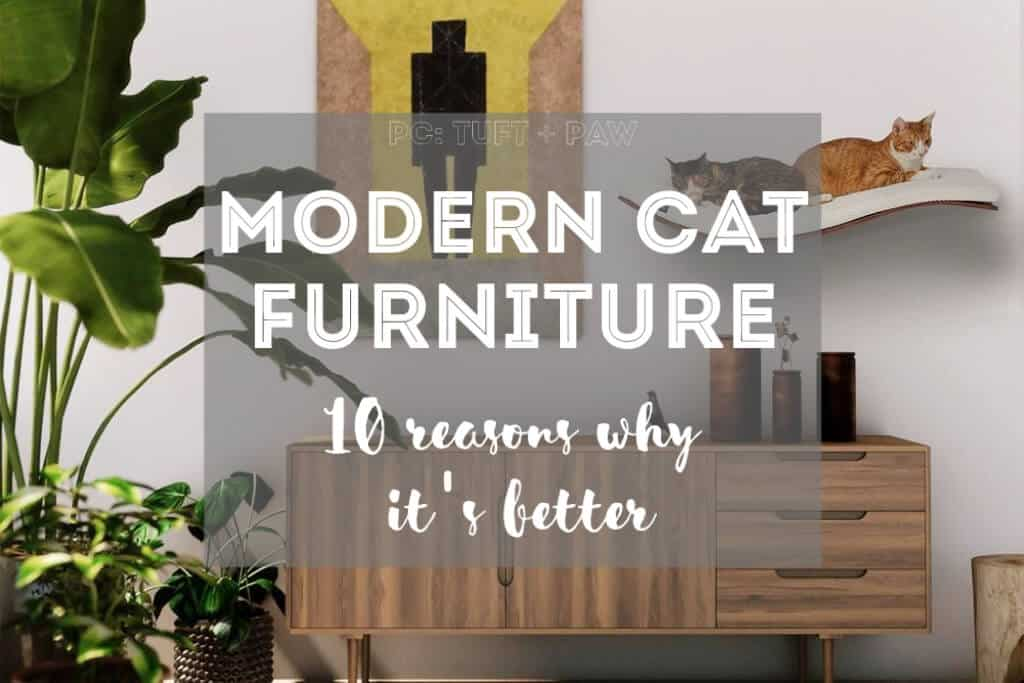Why Buy Modern Cat Furniture 10 Reasons Why It S Better Fluffy Kitty