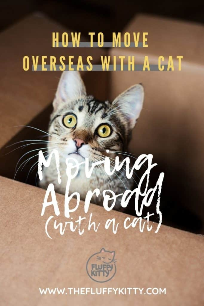 Moving Abroad with a Cat: How to move overseas with a cat ULTIMATE GUIDE www.thefluffykitty.com The Fluffy Kitty #abroad #cattravel #cats #moving