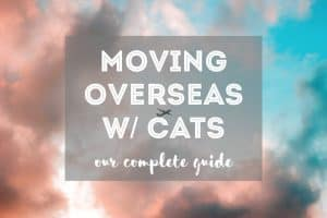 Moving Overseas with Cats   Fluffy Kitty