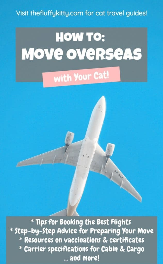 Moving Overseas with Cats Guide | Fluffy Kitty Blog thefluffykitty.com