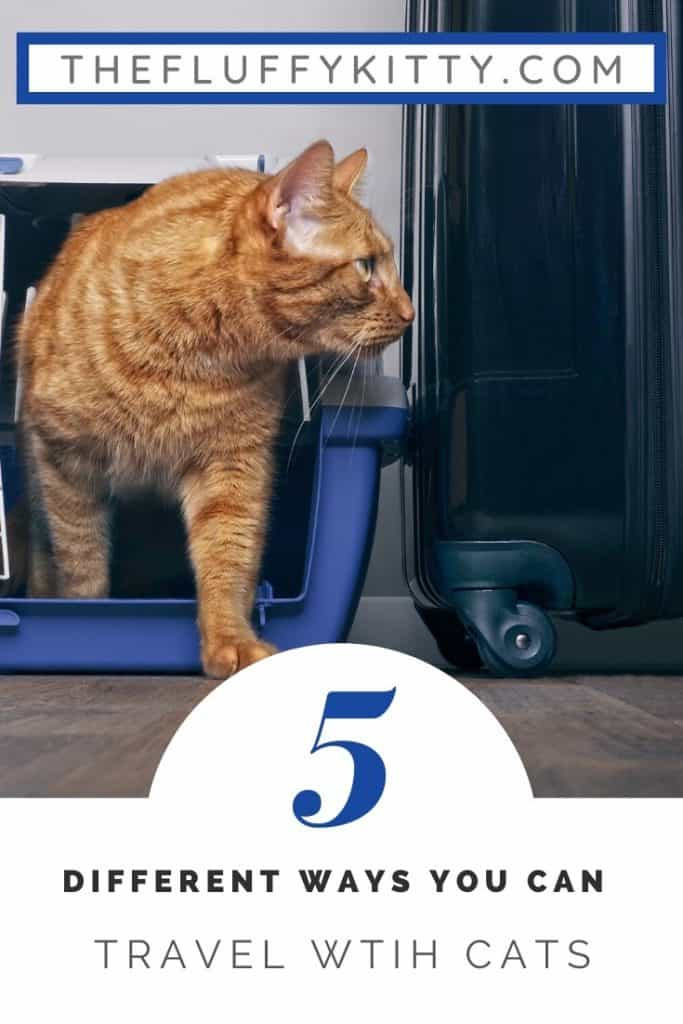 Traveling with Cats: 5 Ways to Travel with Your Cat