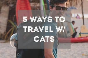 Travel with Cats   Fluffy Kitty's Guide
