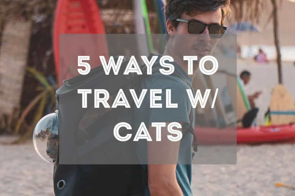 Travel with Cats | Fluffy Kitty's Guide