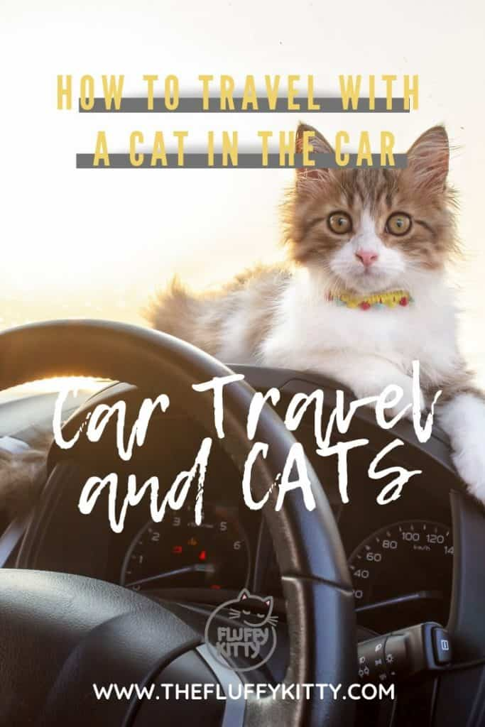 Traveling with a Cat in the Car - Our guide to safe car travel with cats. #cats #travel #cattravel #catlovers The Fluffy Kitty www.thefluffykitty.com