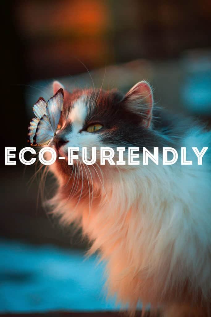 Eco-Friendly Cat Care | Fluffy Kitty