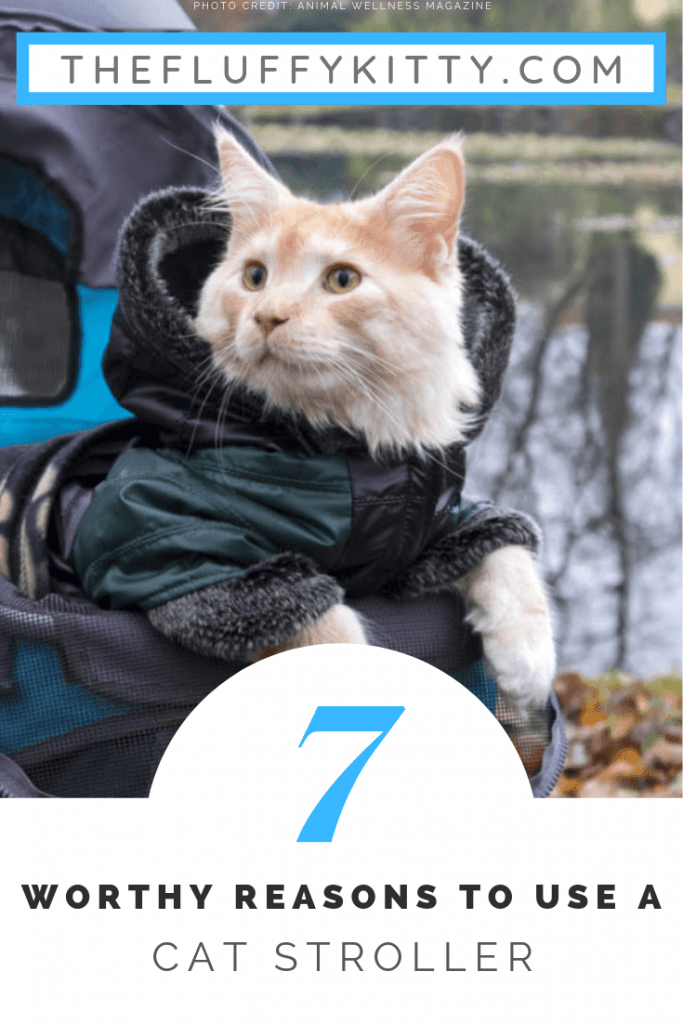 7 Reasons Cat Strollers Are a Good Idea | Fluffy Kitty Blog thefluffykitty.com