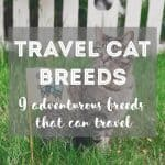 How Long Can You Leave a Cat at Home While on Vacation?
