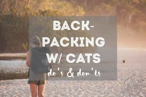 12 Do's and Don'ts of Backpacking with a Cat | Fluffy Kitty