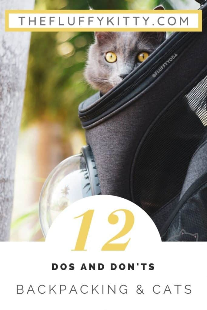 How to Backpack with a Cat - The Dos and Don'ts of Backpacking with Cats #cats #catbackpack #catlovers #adventurecats - The Fluffy Kitty www.thefluffykitty.com