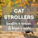 8 Ethical & Eco-Friendly Cat Foods