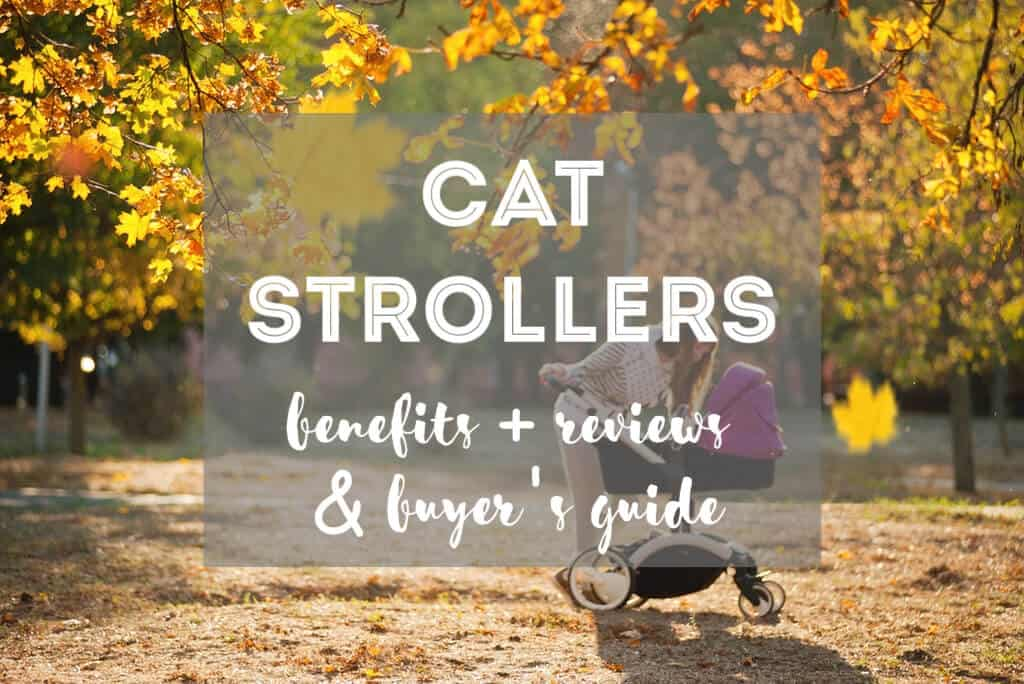7 Reasons Cat Strollers Are a Good Idea + Buyer's Guide & Reviews | Fluffy Kitty thefluffykitty.com