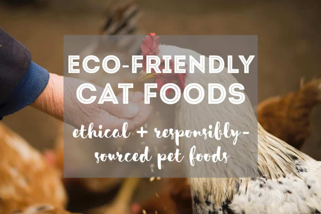 8 Ethical & Eco-Friendly Cat Foods | Fluffy Kitty thefluffykitty.com