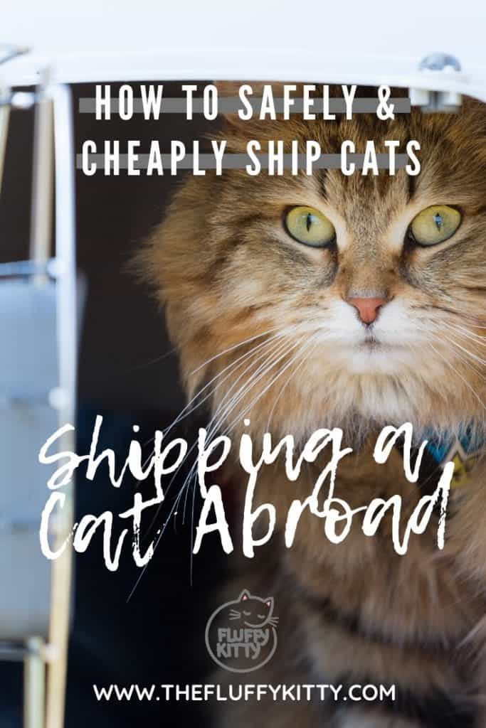 How to Safely and Cheaply Ship a Cat Overseas - Don't overpay to ship your cat! Follow our guide here: The Fluffy Kitty www.thefluffykitty.com #cats #catsofinstagram #catcare #cat
