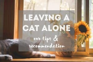 How Long Can You Leave a Cat at Home While on Vacation? // Fluffy Kitty - thefluffykitty.com