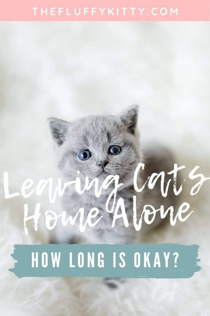 How long is it okay or appropriate to leave a cat at home alone? Find out in our guide here. Fluffy Kitty | www.thefluffykitty.com #cats #catshome #cat #catcare